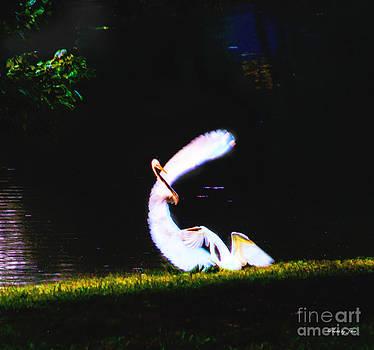 Beauty in Motion  by Jinx Farmer