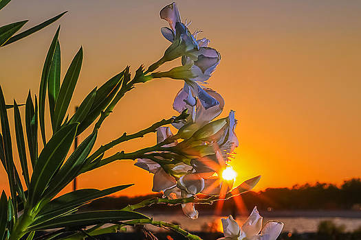 Beauty in the Sun by Brian Wright