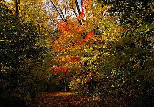 Beauty in the woods by Jocelyne Choquette