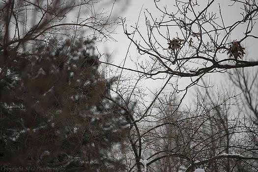 Beauty in Winter 2 by Stacie  Goodloe