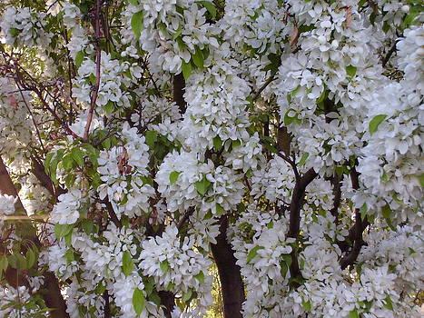 Beauty of Spring by Yvette Pichette