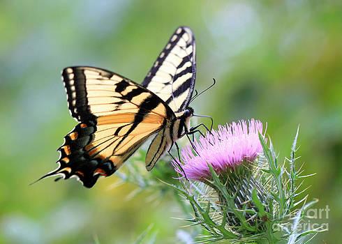 Beauty On Wings by Geoff Crego