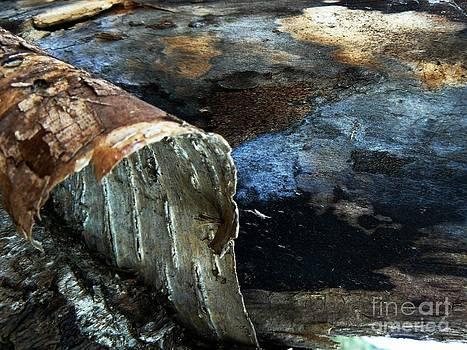 Beaver Pond 46A by Gilda Pontbriand