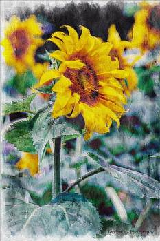Bee and Sunflower Pastel by Jessica Cirz