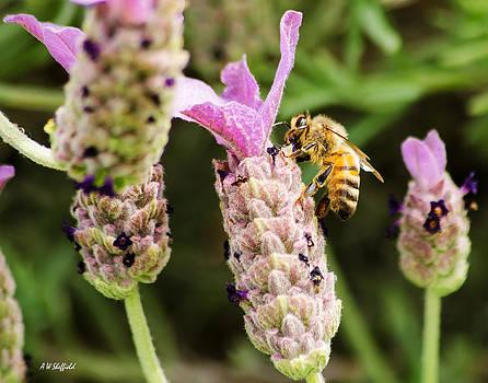 Allen Sheffield - Bee at Work Here