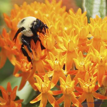Bee Crazy by Ella Buntin