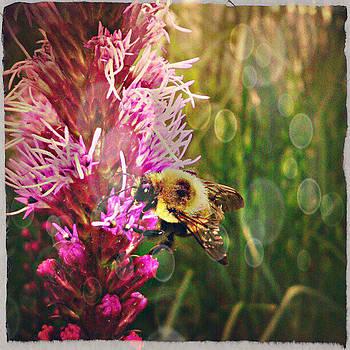 Bee by Pumpkin Reyes