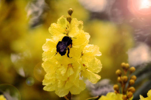 Bee in the sun by Dale Conyers
