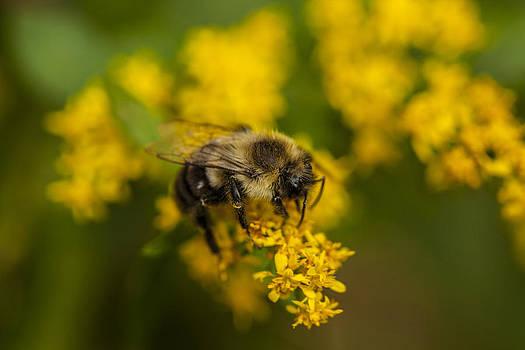 Karol  Livote - Bee Keeping Busy