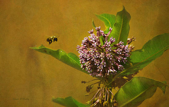 Bee Line by Sandi OReilly