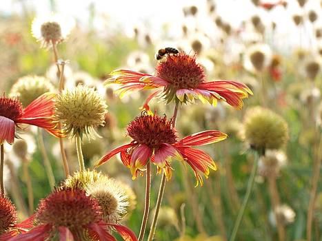 Bee on a Flower by Greg Bush