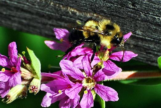 Bee on Duty by Don Mann