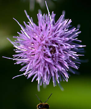 Bee photo bomber by Dave Weth