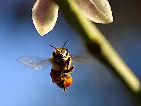 Bee Ready by Ricardo  De Almeida