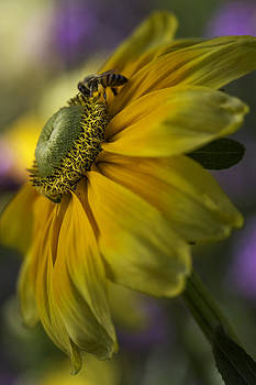 Bee Sunny Day by Kristal Kraft