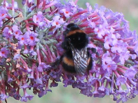 Bee Wings On Buddleia by Bernice Grundy