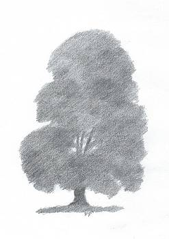 Beech Tree Drawing Number Four by Alan Daysh