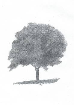 Beech Tree Drawing Number Two by Alan Daysh