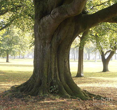 Beech Tree on the Village Green by Elaine Jones