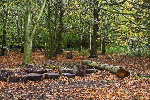 Jane McIlroy - Beech Wood in Autumn