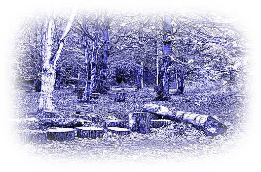Jane McIlroy - Beech Woods