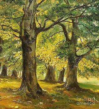 Beeches in the park by Sorin Apostolescu