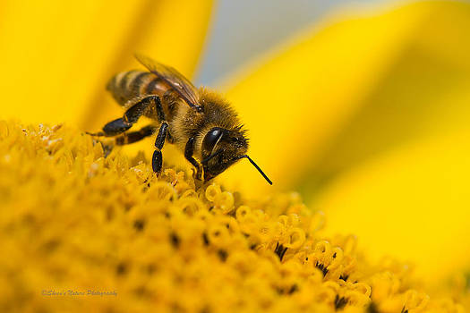 Bee's Treat by Sheen Watkins