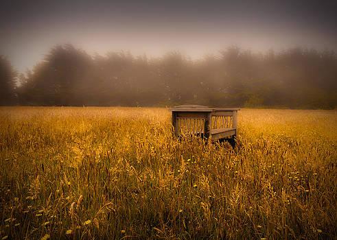 Bench by Fernando Oliveira