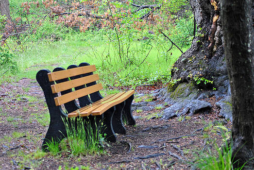 Bench in the Rain by Judy Salcedo