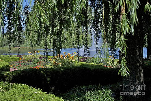 Beneath the Weeping Willow by Nikki Criel