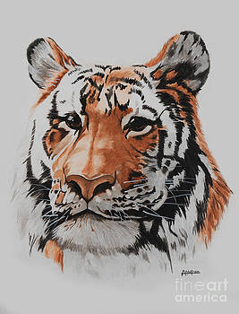 Bengal Tiger by Alan Wolfram