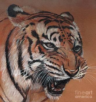 Bengal Tiger by Morgan Fitzsimons