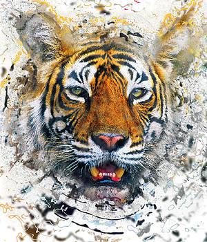 Bengal tiger by Sergey Korotkov
