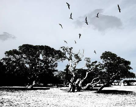Bent Trees by Joseph Tese