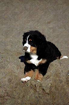 Bernese Mountain Dog Puppy In The Sand by Olde Time  Mercantile