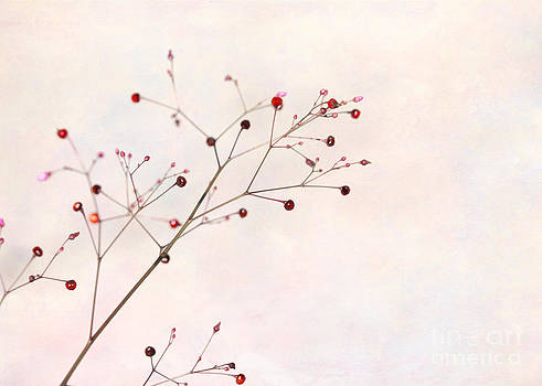 Sabrina L Ryan - Berries on a Branch