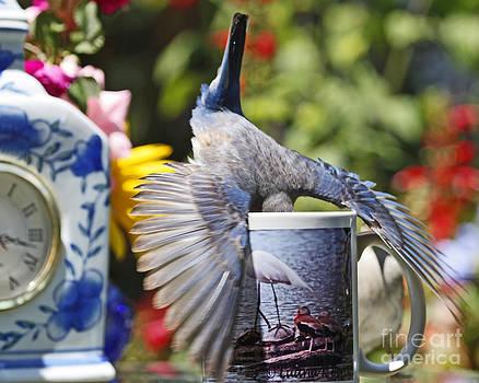 Betty Bluebird Loves Her Coffee Latte Photo by Luana K Perez