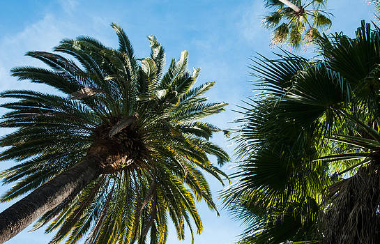 Beverly Palms by Lee Roth