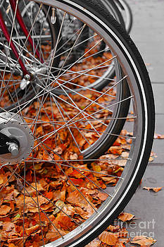 Svetlana Sewell - Bicycle Wheels