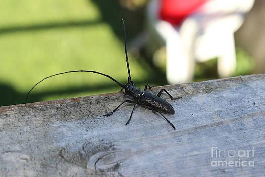 Big Bug by Doreen Lambert