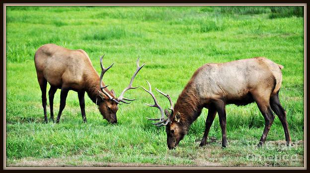 Big Bull Elk  by Mindy Bench