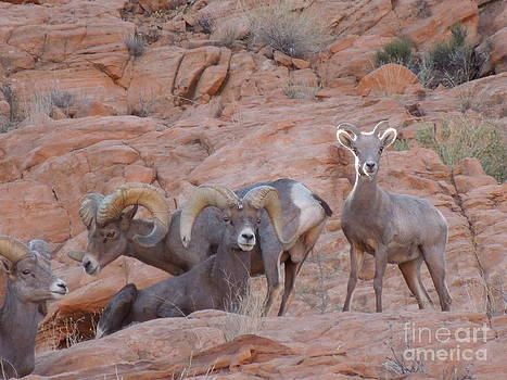 Big Horn Group Pose by Donna Jackson