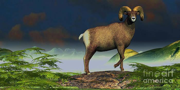 Corey Ford - Big Horn Sheep