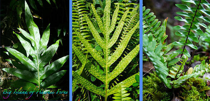 Big Island of Hawaii Ferns by Colleen Cannon