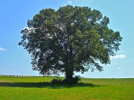 Jennifer Lamanca Kaufman - Big Old Tree