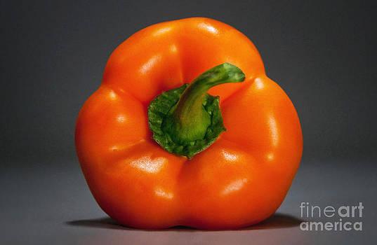 Big Orange Bell by Dan Holm