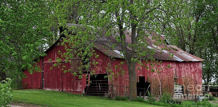 Liane Wright - Big Red Barn