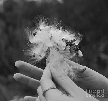Big Wishes by Waverley Dixon