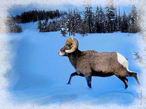 Kae Cheatham - Bighorn Ram