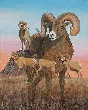 Bighorn Ram study 2011 by J W Kelly